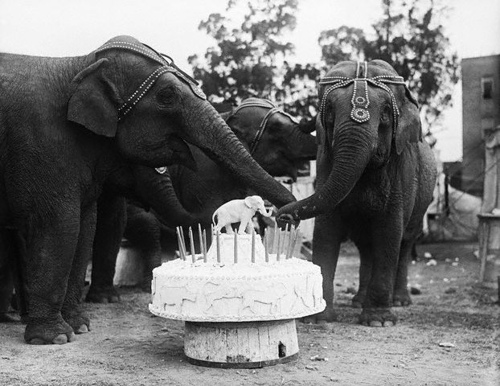 vintage-photography-birthday-cake